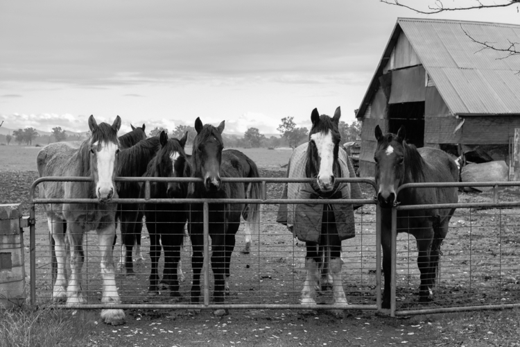 Waiting breakfast. Horses farm  - tedhamilton | ello