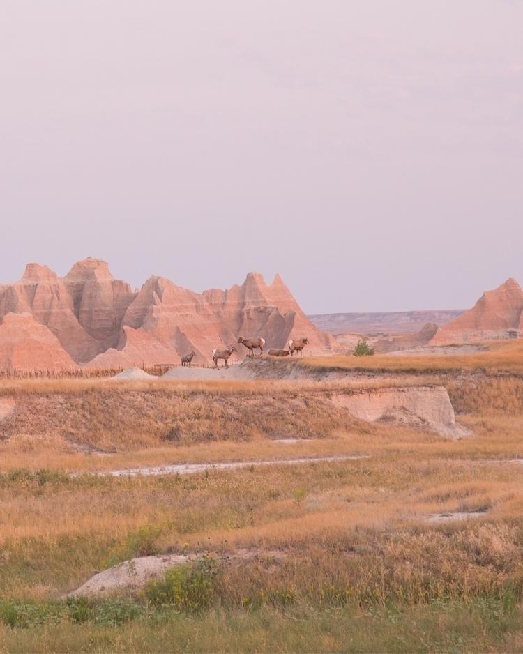 badlands critters - adventure, landscape - madelinejean | ello