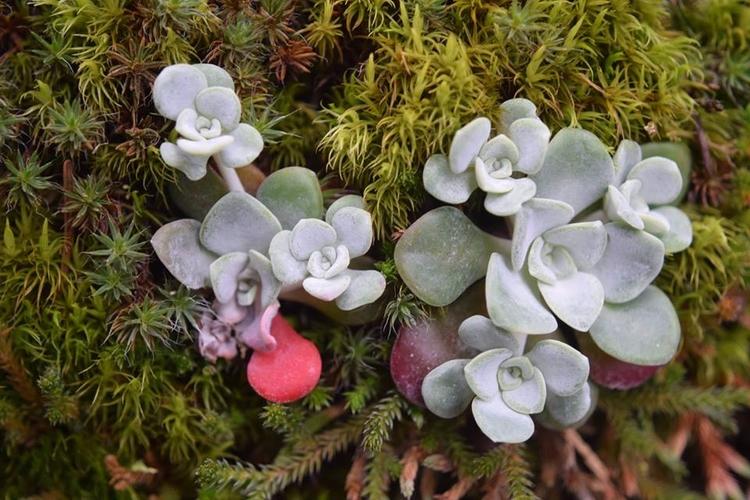native succulents - succulent, plant - f-delancey | ello