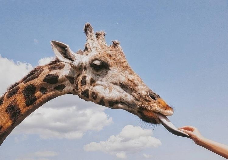Ode Michelangelo - wildlife, africa - francesco_shank | ello