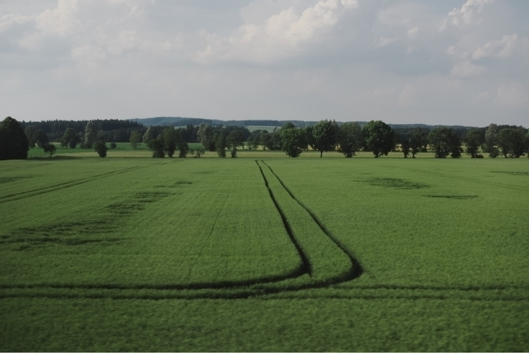 photography, landscape, green - alexmanzphotography | ello