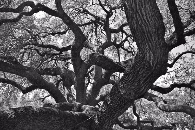Texas - 2013 white - black, travel - boomhood | ello