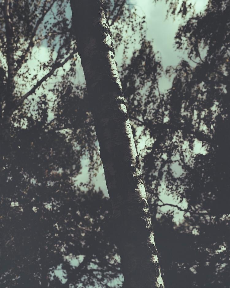 Weekend woods. - palegrain.com - palegrain | ello