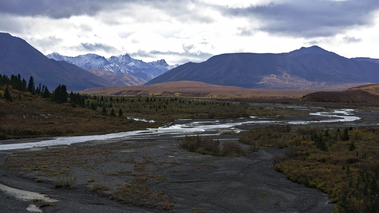 Autumn Savage River. Denali Nat - lwpetersen | ello