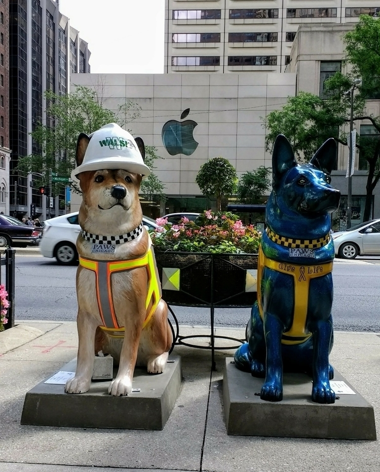 Work play ~ canine - Chicago, DogDays - manualmystique   ello