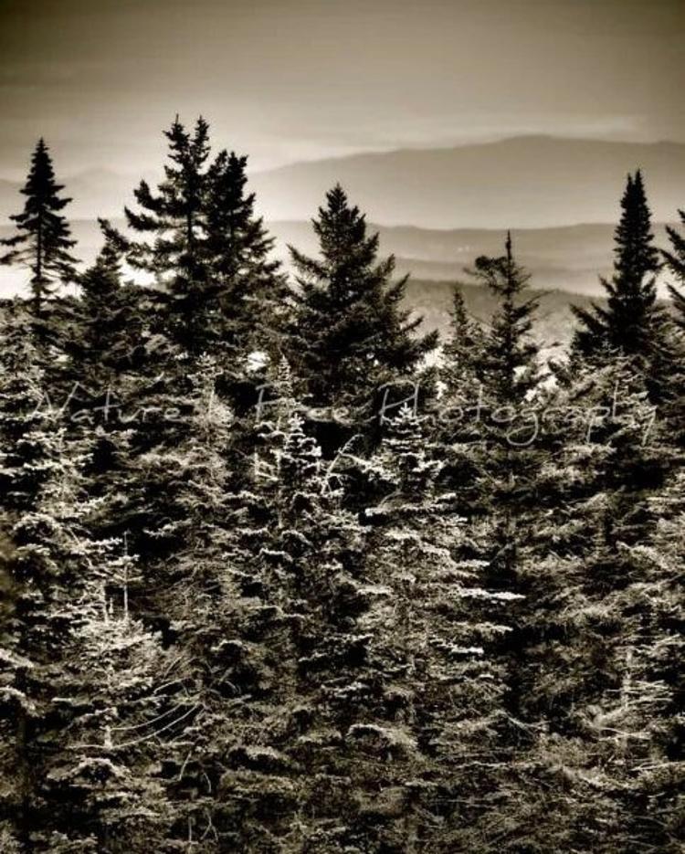 forest peace passeth understand - natureisfree | ello
