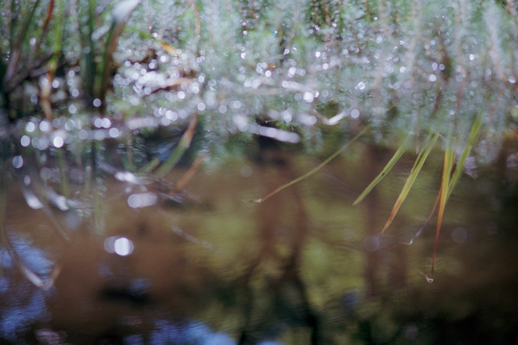 Reflections pond. Crystal Castl - dropshot | ello