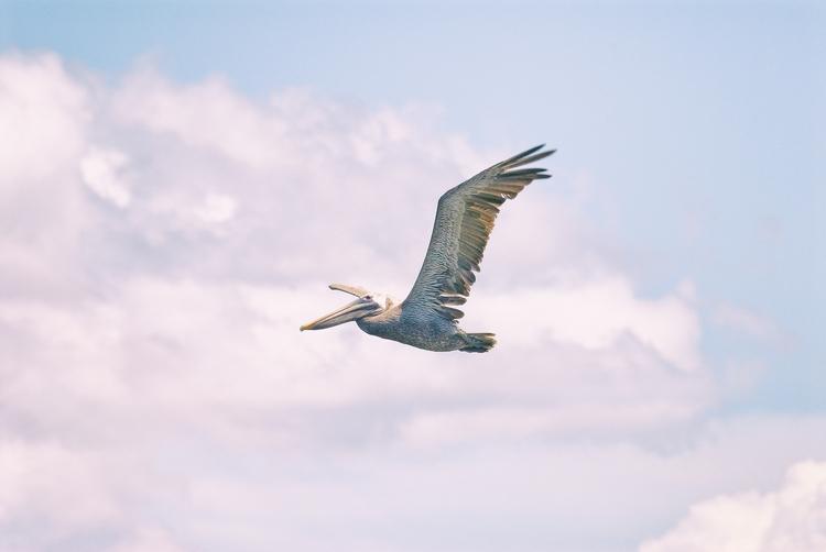 flight pelican, III Maria Islan - christofkessemeier | ello