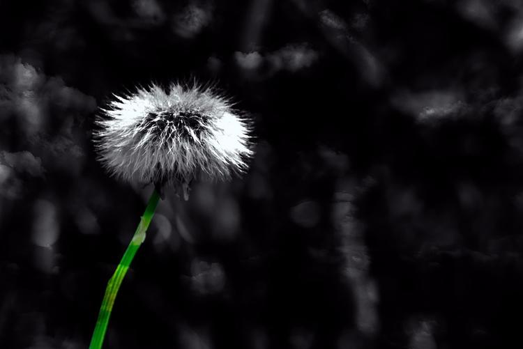 Straw Life - flower, flowers, macro - doc   ello