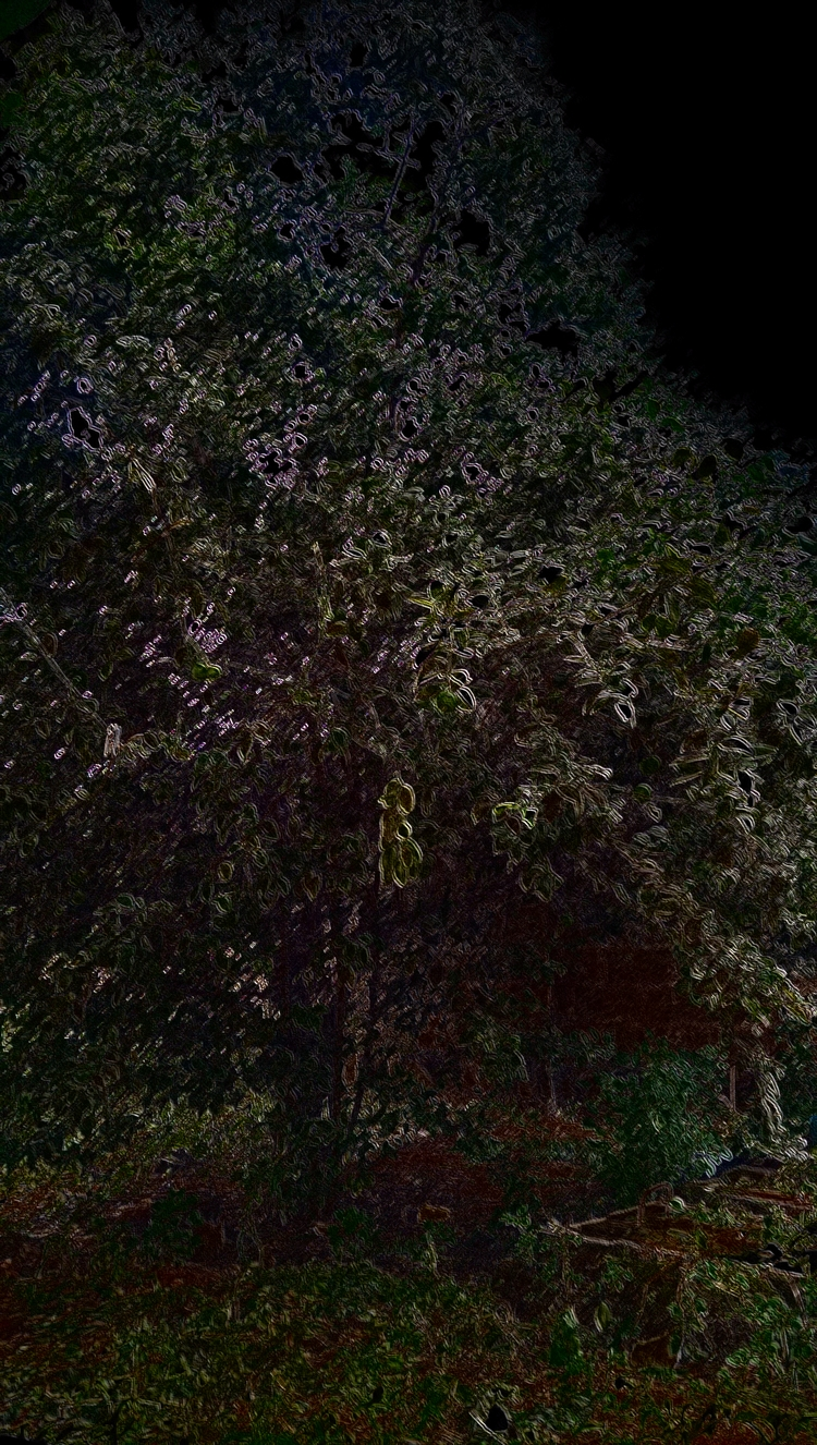 lime tree backyard - nature, africa - tronixinc | ello