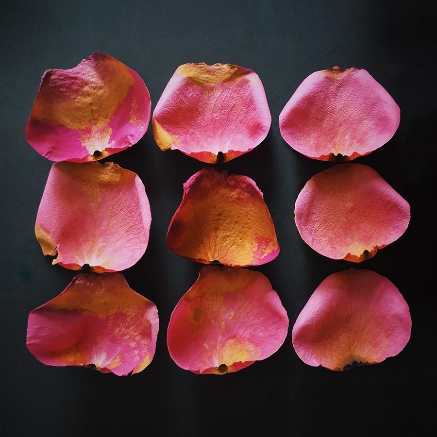 flowers, petals - podstrigich | ello
