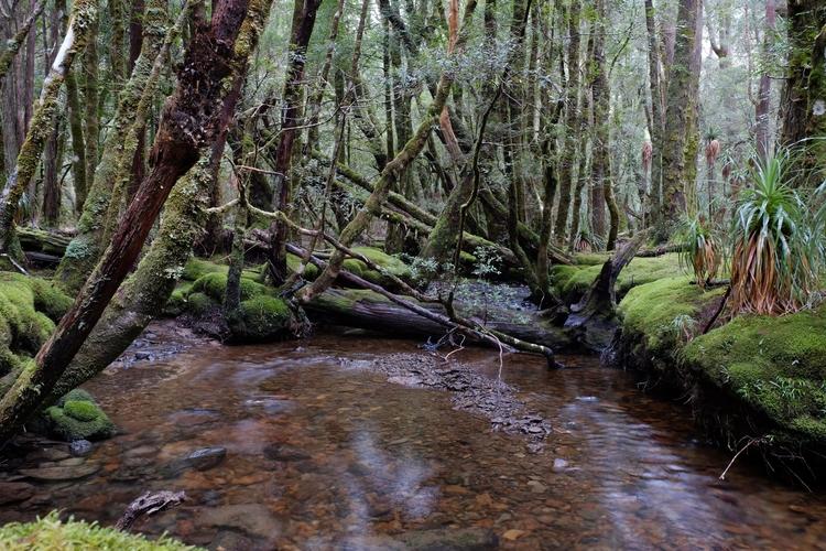 Cradle........Ancient Forest - nolongerthere   ello