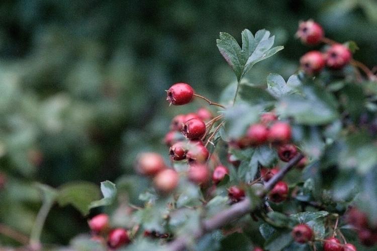 Autumn favourite season - hannahjaneclements | ello