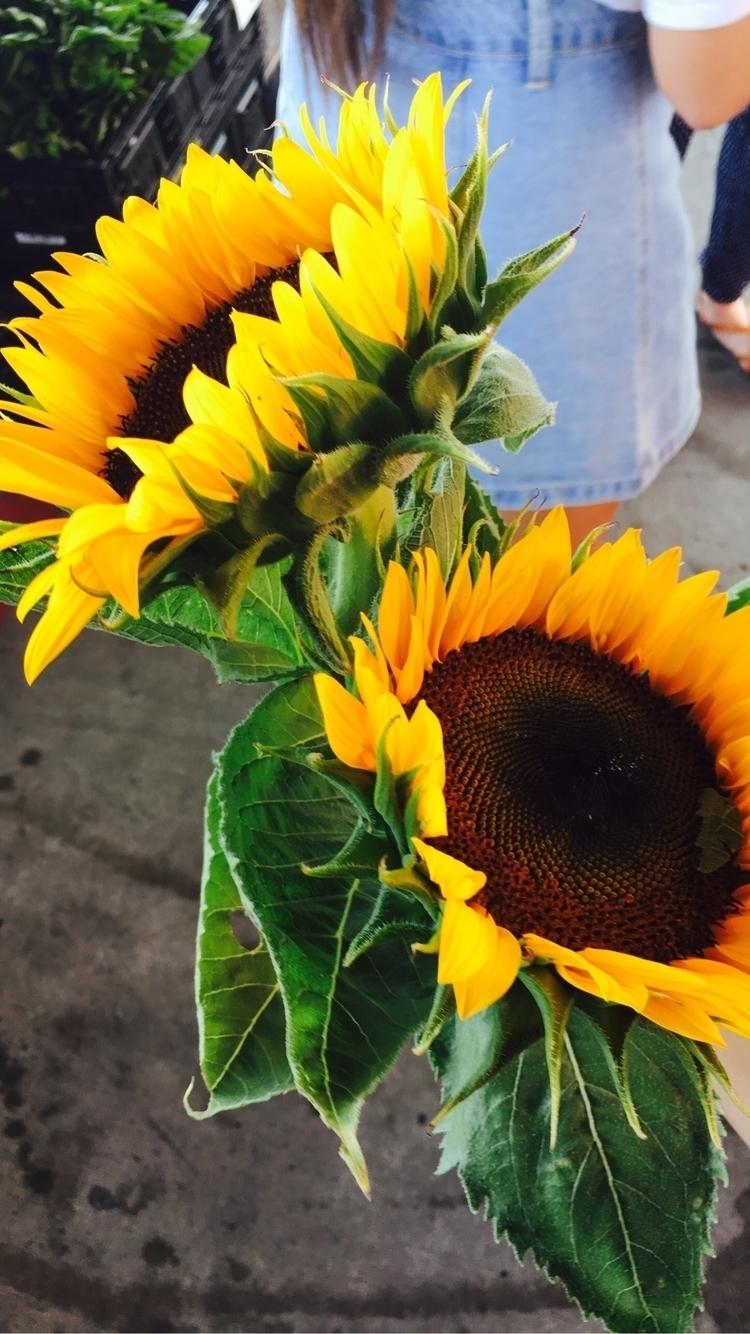 Kansas, sunflower - melissaaanguyen | ello