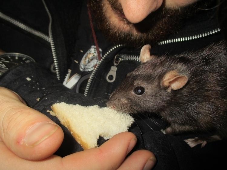 creature hungry - rats, littlecreature - pleasantcynic | ello