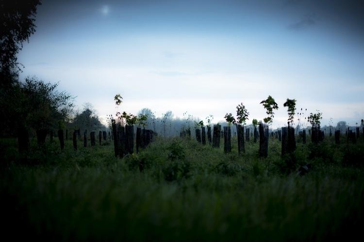 men; tree roots, stuck present - philippe_schoen   ello