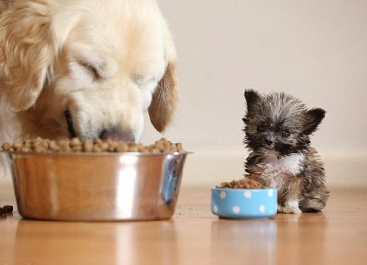 <3 Perros, gatos, loros, per - mascotaguia | ello