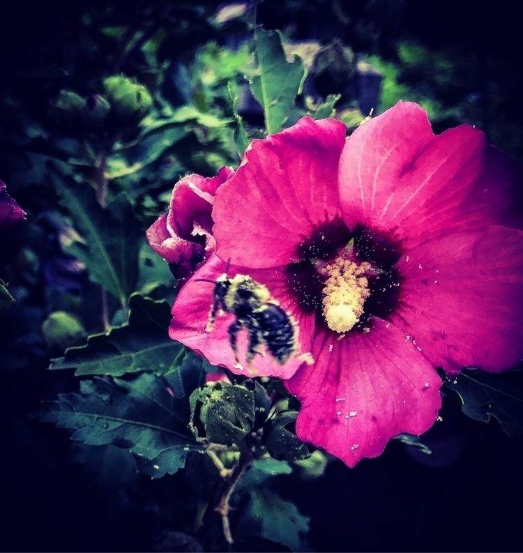 Silly bee:honeybee - flower, love - illaurail | ello