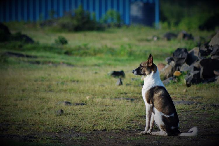 Focus - India - atulbw | ello