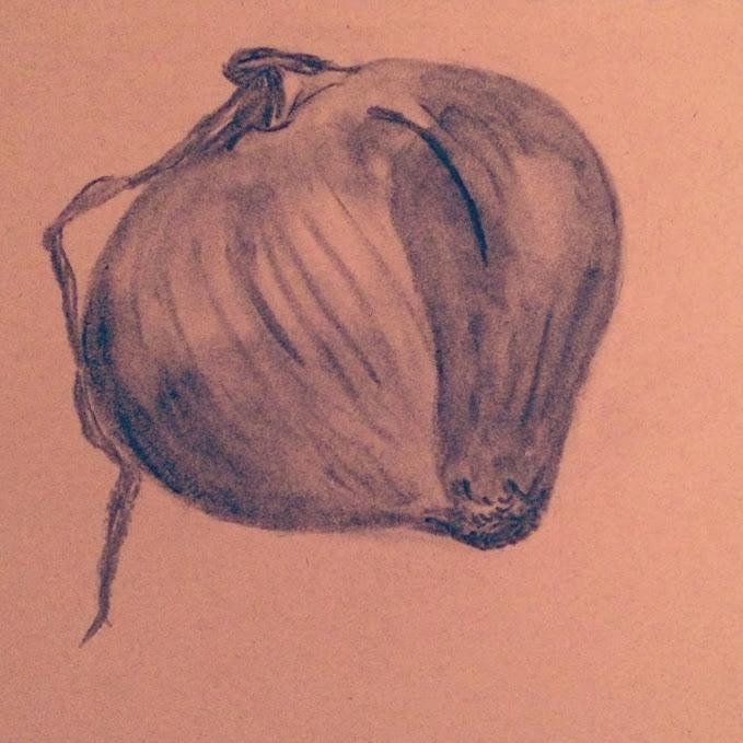 onion, charcoal papier - helenaugusta | ello