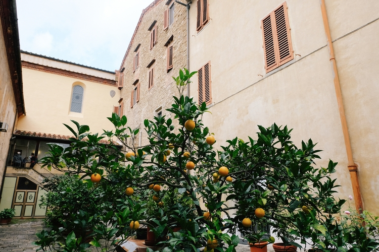 Orange Trees Florence, Italy - travel - kateholl | ello