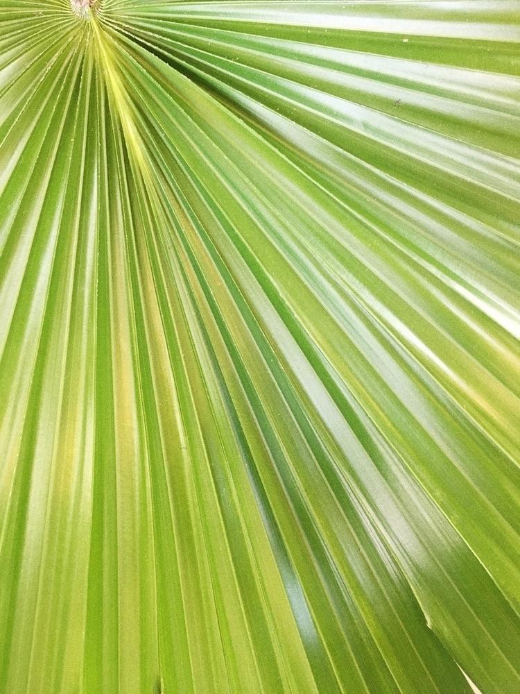 Flora   August, 2017 - plantlife - kateholl   ello
