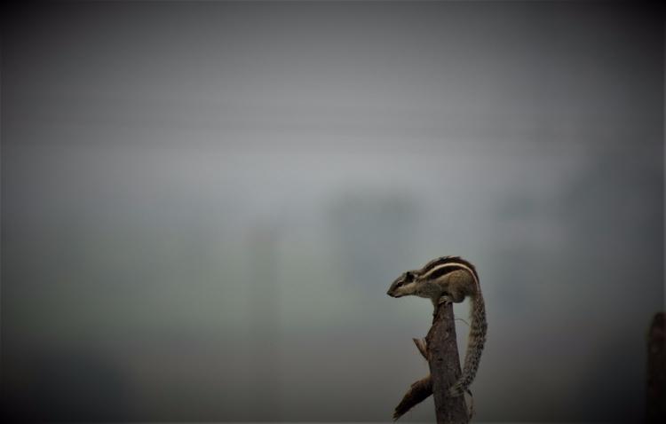 India, Squirrel - atulbw | ello