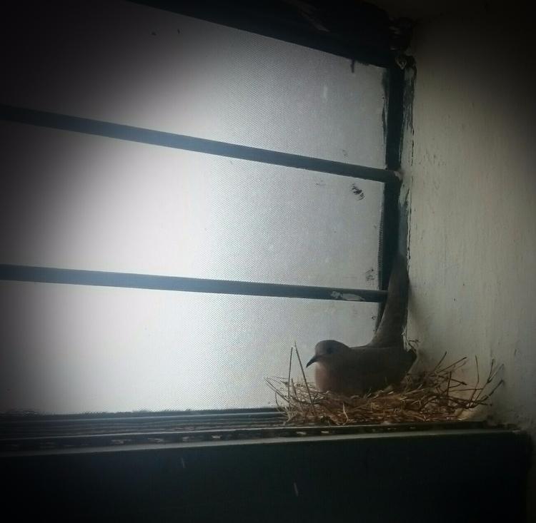 India, Nest. - atulbw | ello