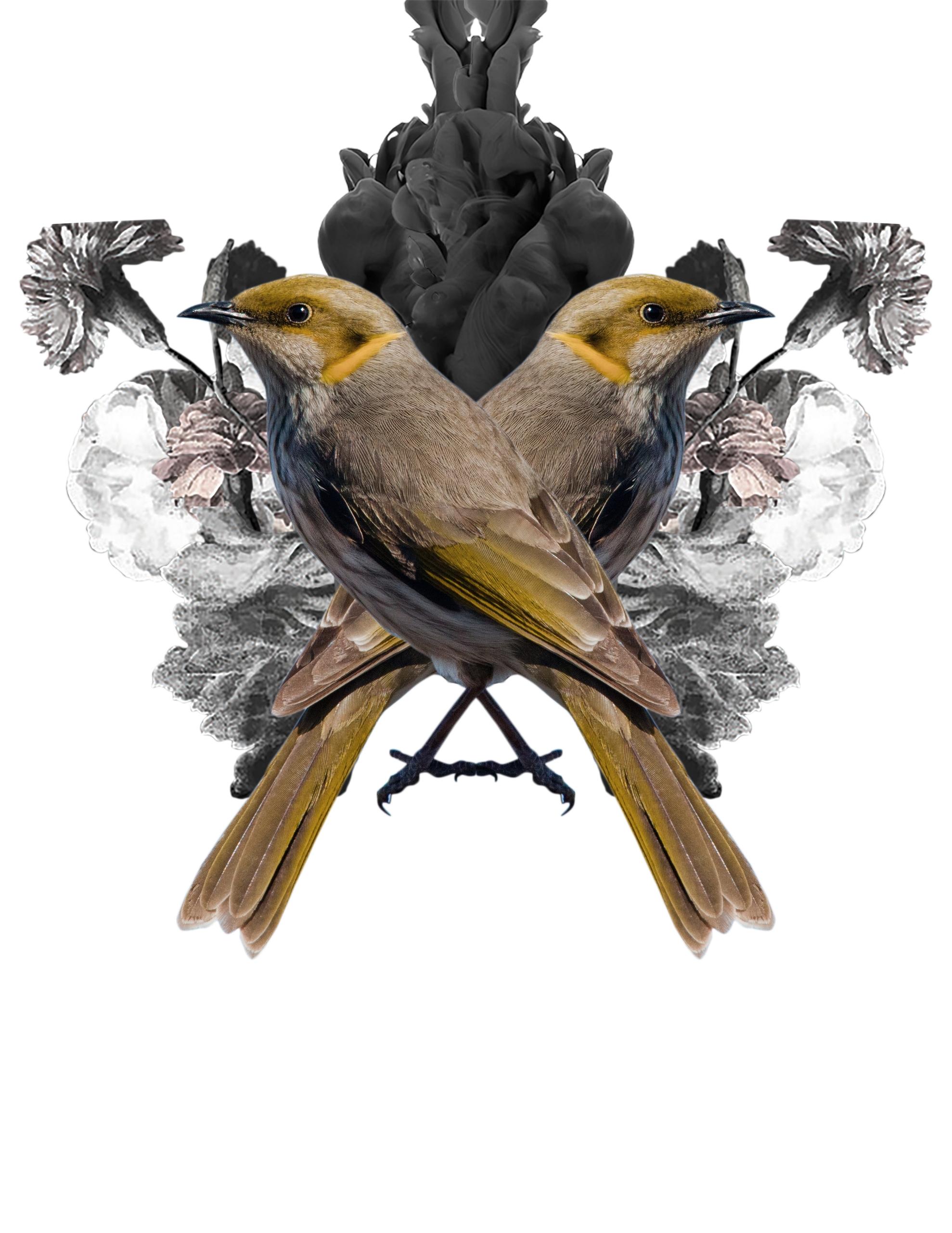 collage - digital - marianagv | ello