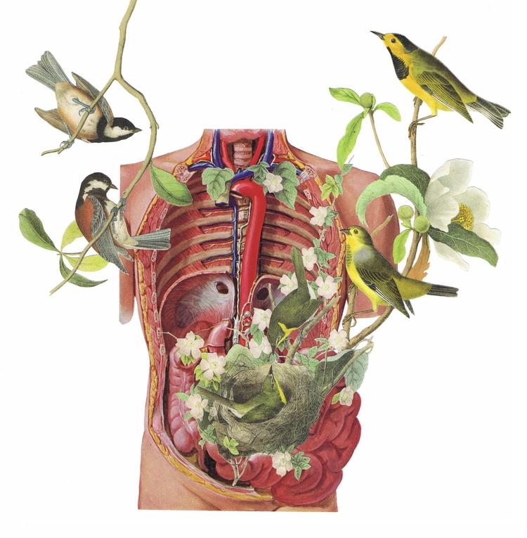 birds - revised - marieconigliaroart | ello