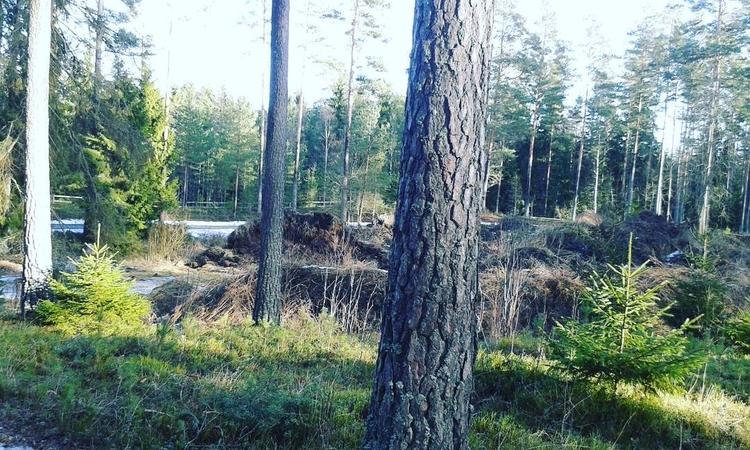 Även trädens grenar har en sist - skogskyrkogardar | ello