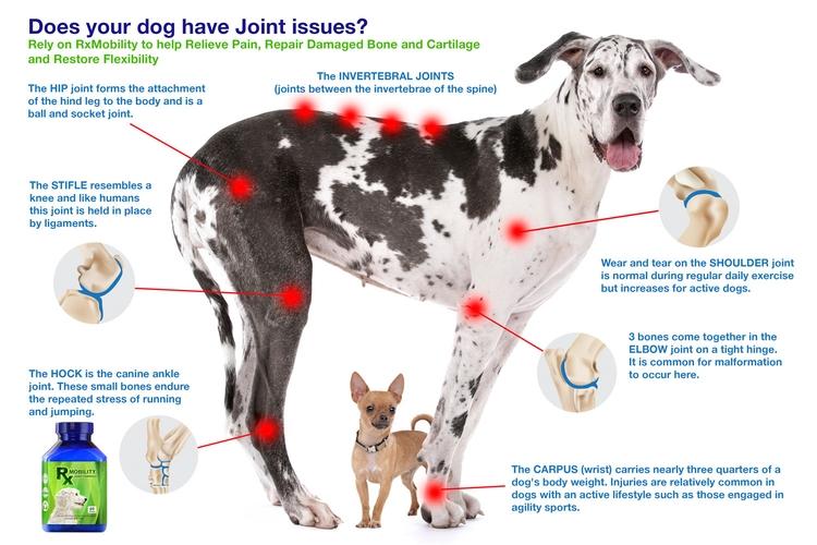 dogs legs susceptible stress da - rxmobility   ello