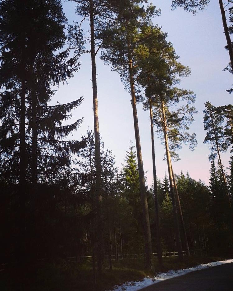 Ett enkelt trästaket utgör Skog - skogskyrkogardar | ello