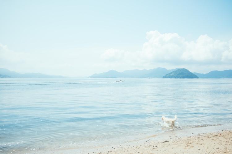 running dog / beach - superidol | ello