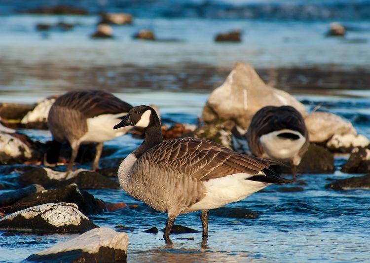 source - nature, animal, birds - feasteeddie | ello
