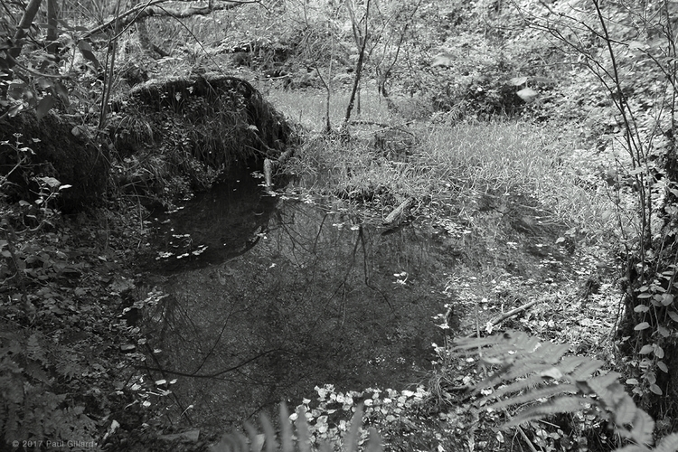 Small pond - 001 - blackandwhite - paulgillard | ello