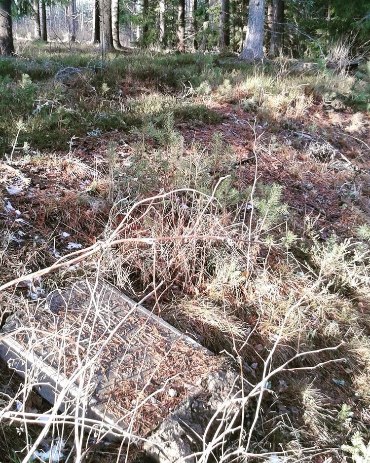 Gravstenarnas sista vila på Sko - skogskyrkogardar | ello