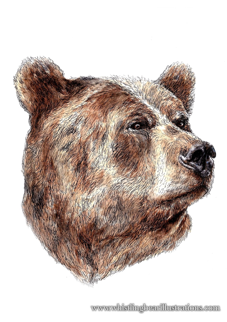 Bear - watercolour, illustration - whistlingbear | ello
