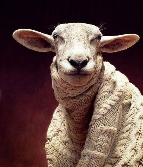 Happy Fall love Sheep wool - sheep - laurabalducci | ello
