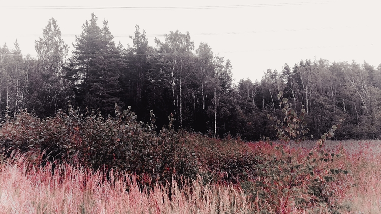 nature, lithuania, landscape - beheroght | ello