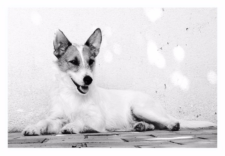Marte - dog, photography, blackandwhite - enicekay | ello
