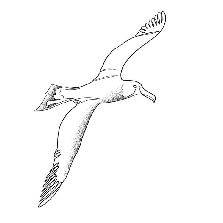 Seagull. Single line - seagull, albatross - bymosler | ello