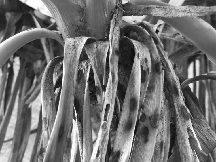 Palm Tree Fonds Apps - mikefl99 - mikefl99 | ello