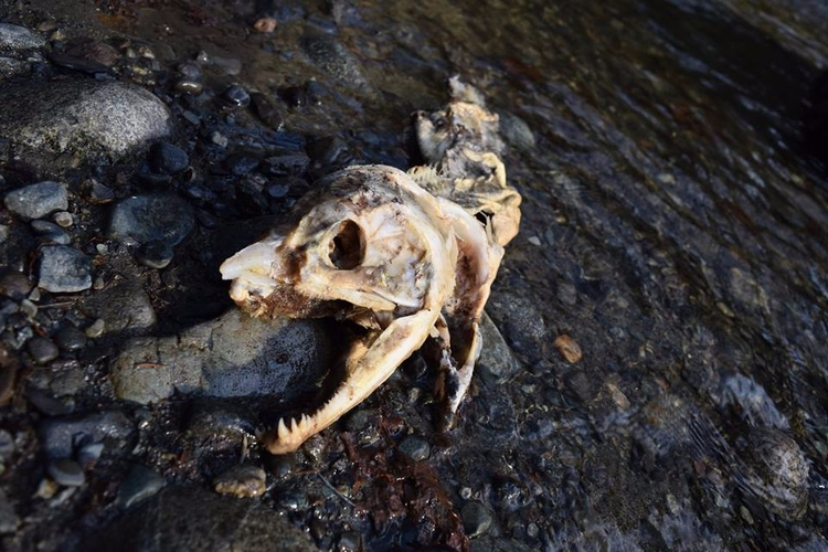 aftermath spawning season - nature - f-delancey   ello