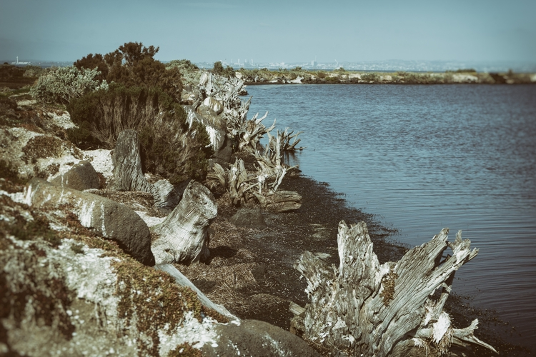 trees die Avalon Coastal Reserv - garylight | ello