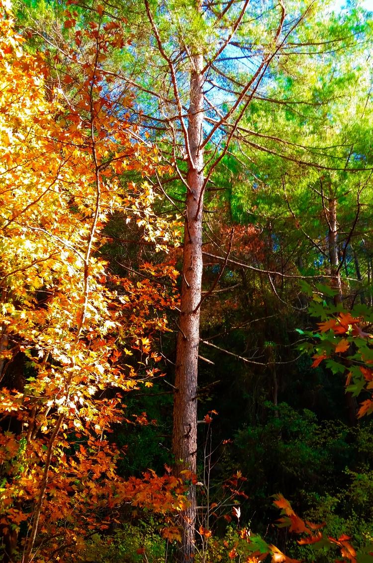 season autumn feel - autumun, tree - yabanyolu | ello