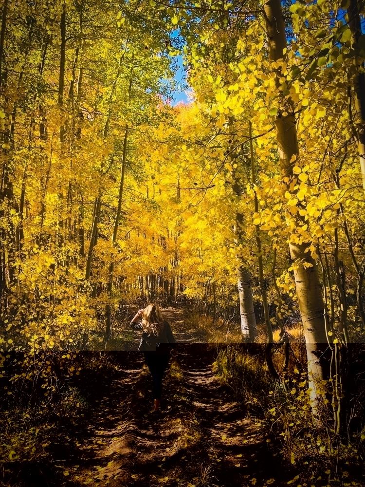time year - fall, autumn, winteriscoming - jimi3 | ello