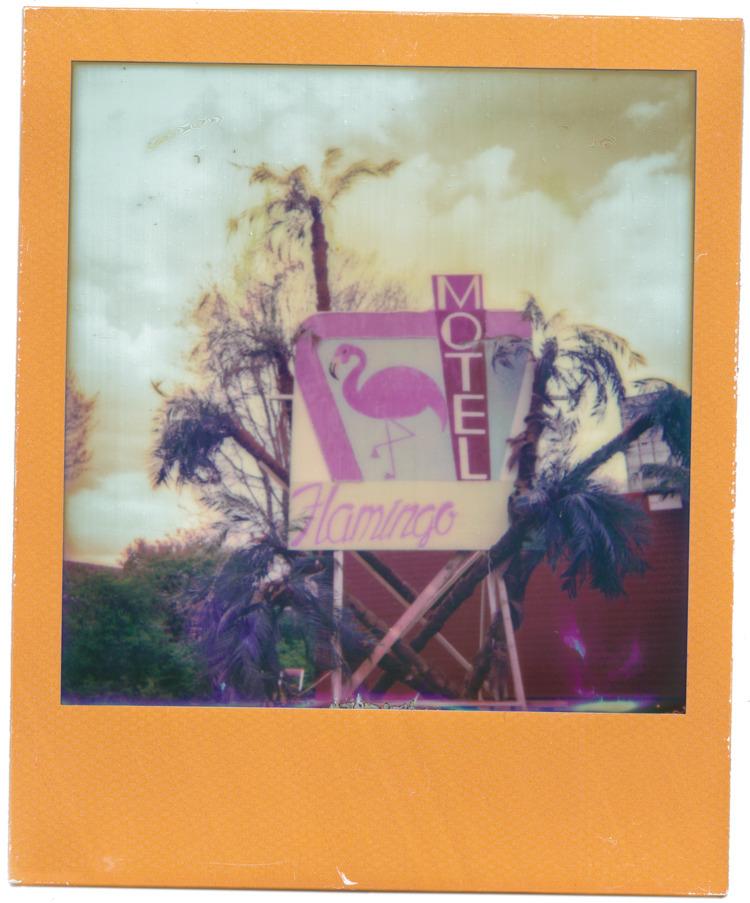 motel flamingo Roadburn 2016 ca - alodia | ello