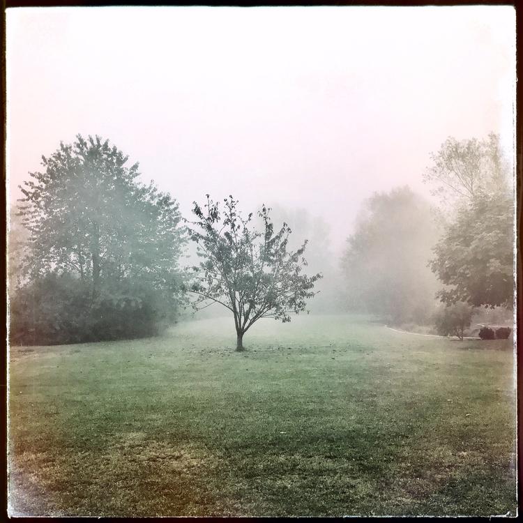 fogyyday, septembermorning, fall - willkreutz | ello
