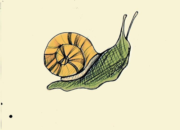 Faster wind - Snail, illustration - petro5va5iadi5 | ello